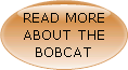 Read more about the bobcat here